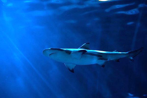 Gefährliche Tiere unter Wasser